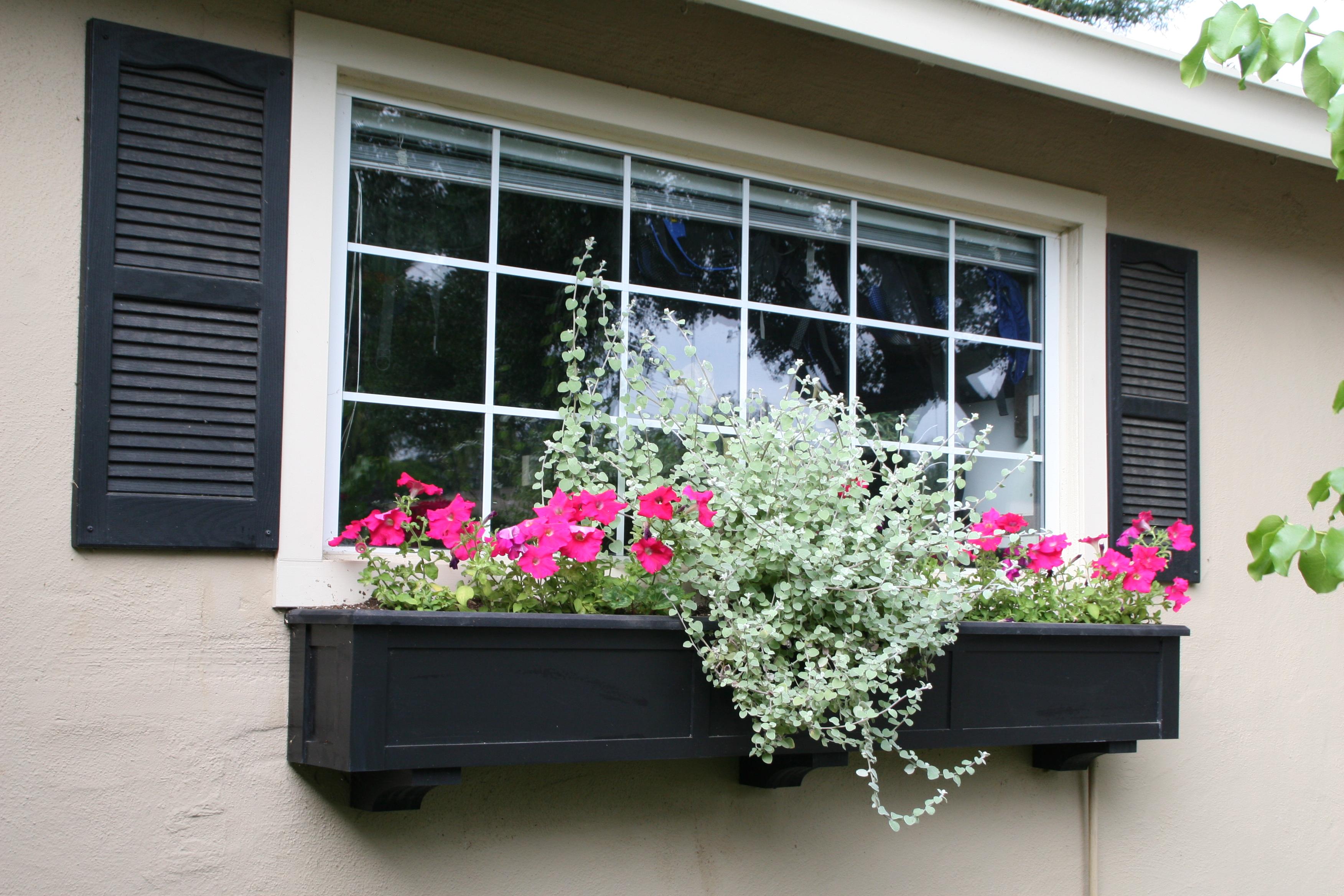 Цветы на балконах и окнах. - металлопластиковые окна и двери.