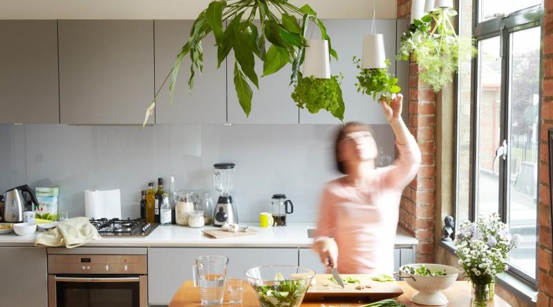 Кухня с комнатными растениями