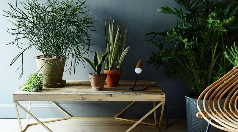 Прихожая с комнатными растениями