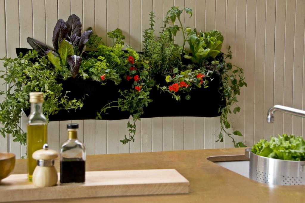 Кухня с комнатными растениями в композиции