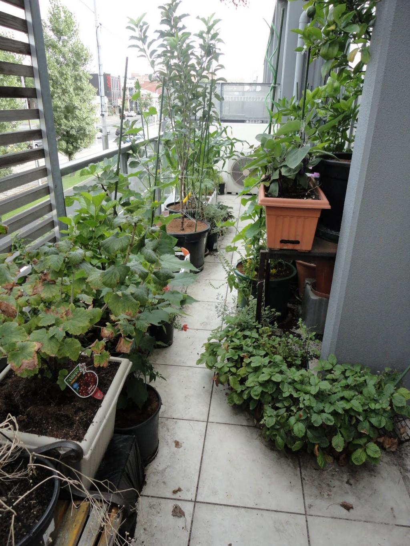 Помидоры на балконе : выращивание пошагово, как вырастить в домашних 49