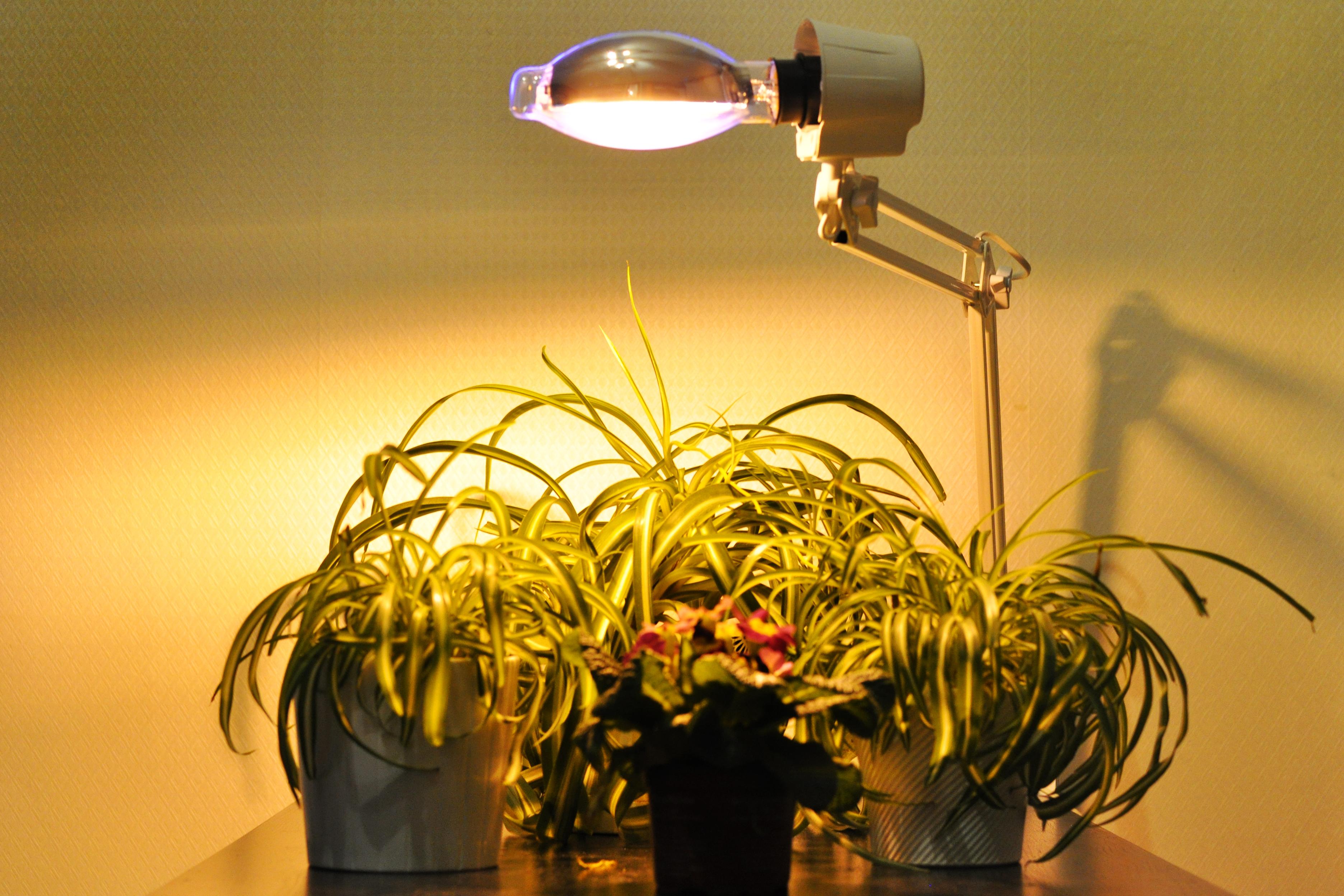 Правильное освещение аквариумов Освещение растений и