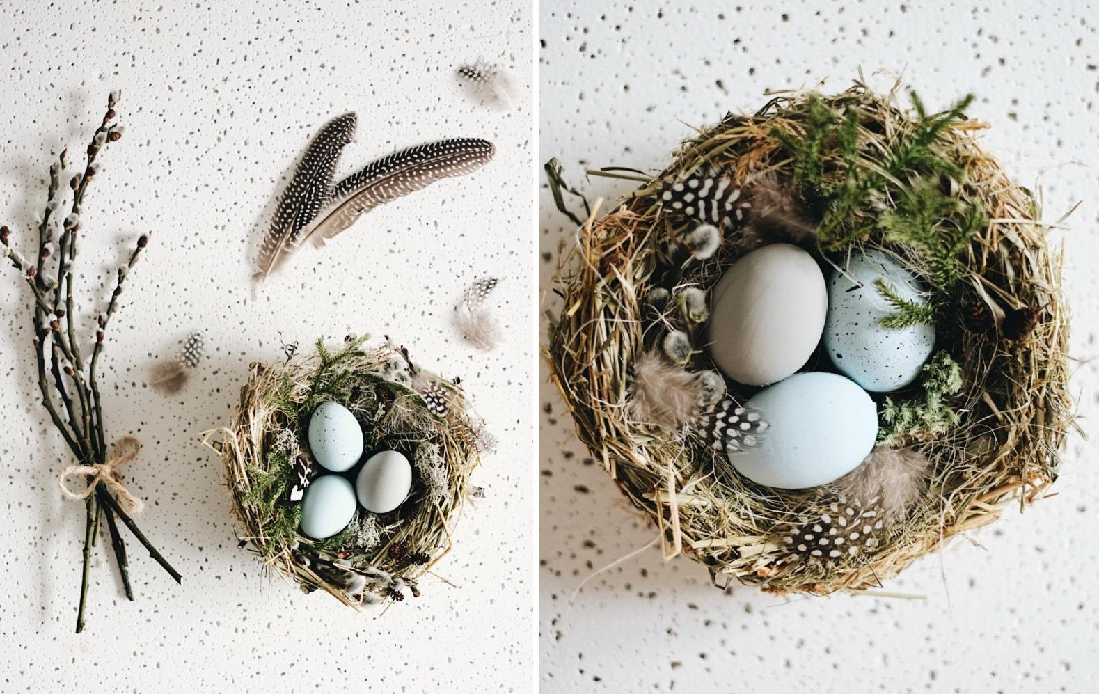 Как спасти птенца, выпавшего из гнезда Энциклопедия