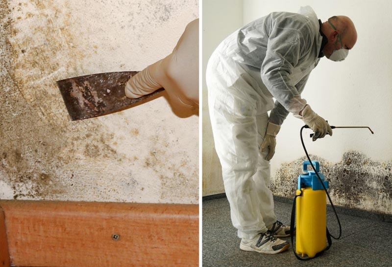 обработка бетонных стен от грибка и плесени