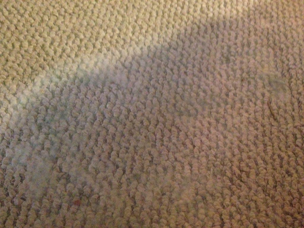 Плесень на ковре что делать