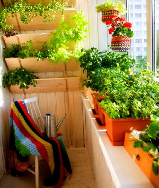 Выращивание на балконе 98