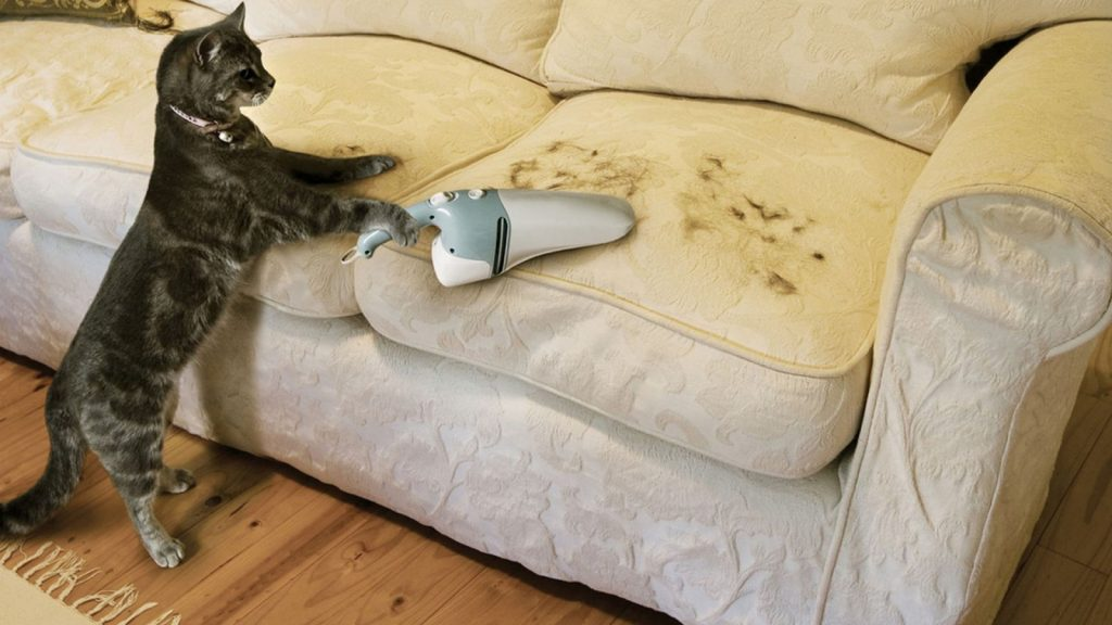 Как собрать шерсть кошки с ковра или дивана