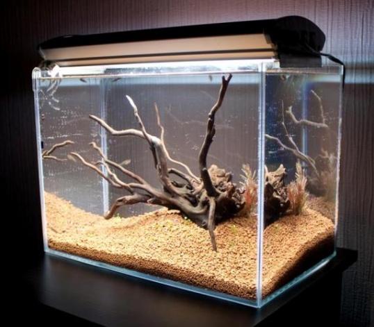 Как сделать корягу для аквариума своими руками в пять шагов в фото