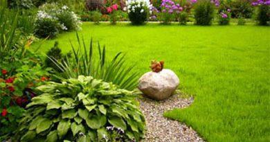 Создание газона: шаг за шагом