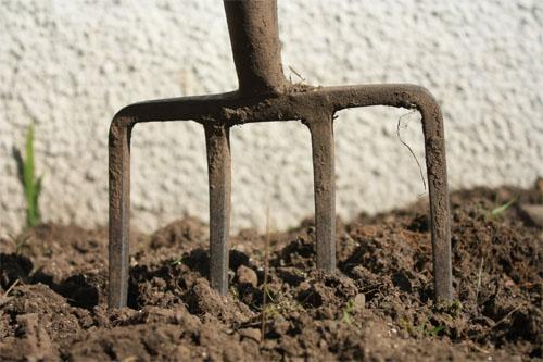 Первые весенние работы в саду: готовимся к новому сезону в фото