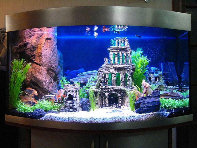 Дизайн аквариума своими руками фото 400