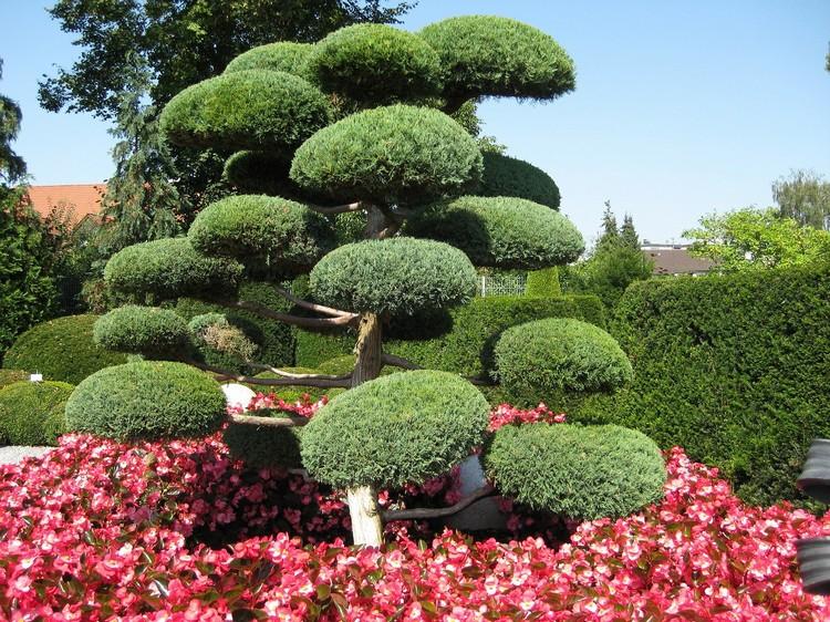 Ниваки и садовый бонсай: кусочек живой Японии в вашем саду (35 фото) 90