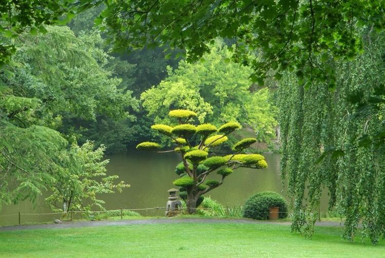 Ниваки и садовый бонсай: кусочек живой Японии в вашем саду (35 фото) 28
