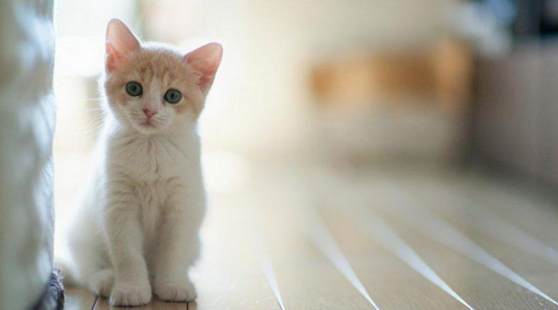 В доме животные: правила оформления квартиры если у вас собака или кошка