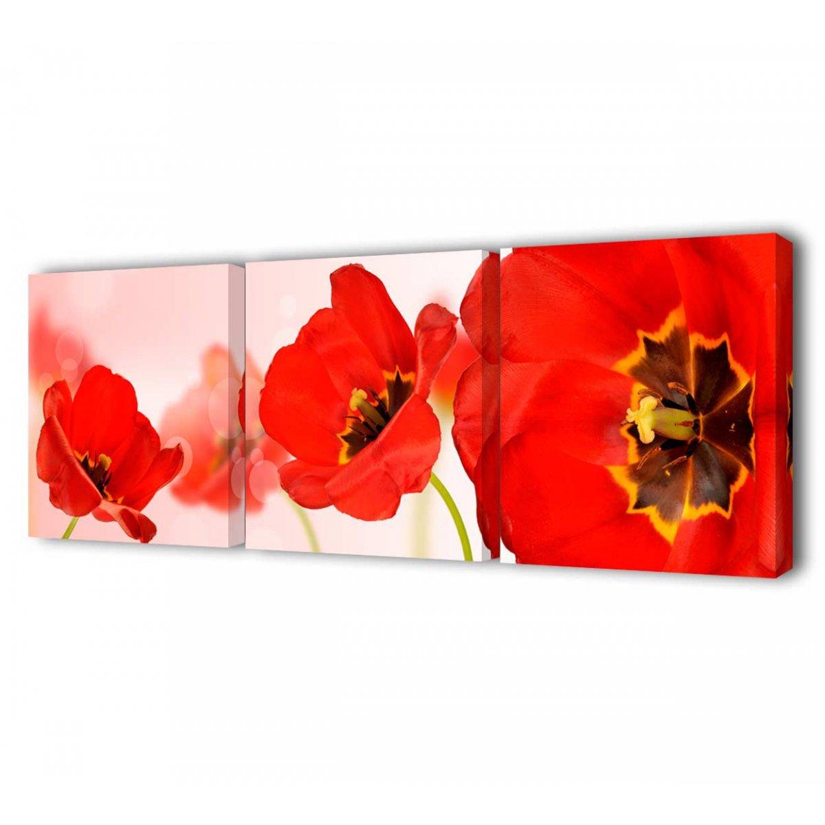 Цветы фото садовые фото и название по алфавиту