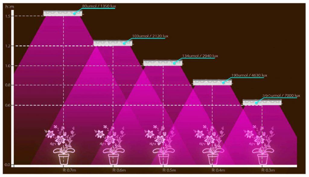 Уровни освещенности для комнатных цветов