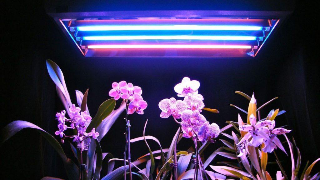 Как выбрать подсветку для цветов