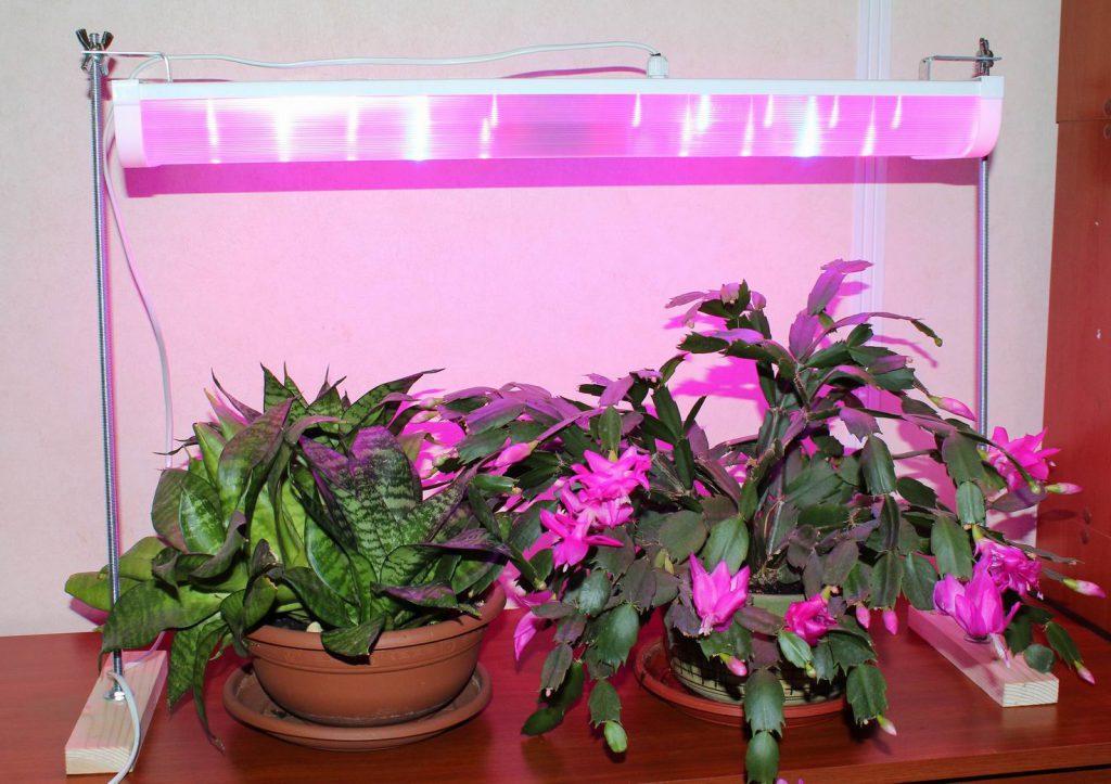 фитолампа для подсветки цветов