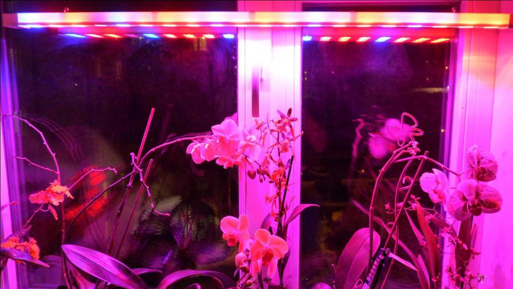 подсветка орхидеи зимой