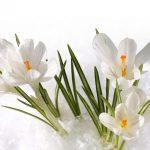 Оформление праздничного стола на Пасху [правила и традиции]