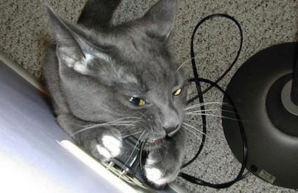 Защита кабелей и проводов от грызунов, кошек и собак