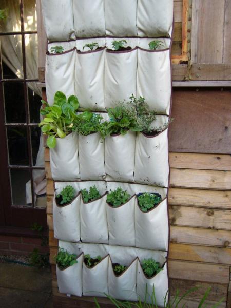 Огород на балконе: все, что нужно знать для новичков
