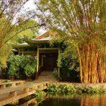 Фэн-шуй во дворе: бамбук или сосна?