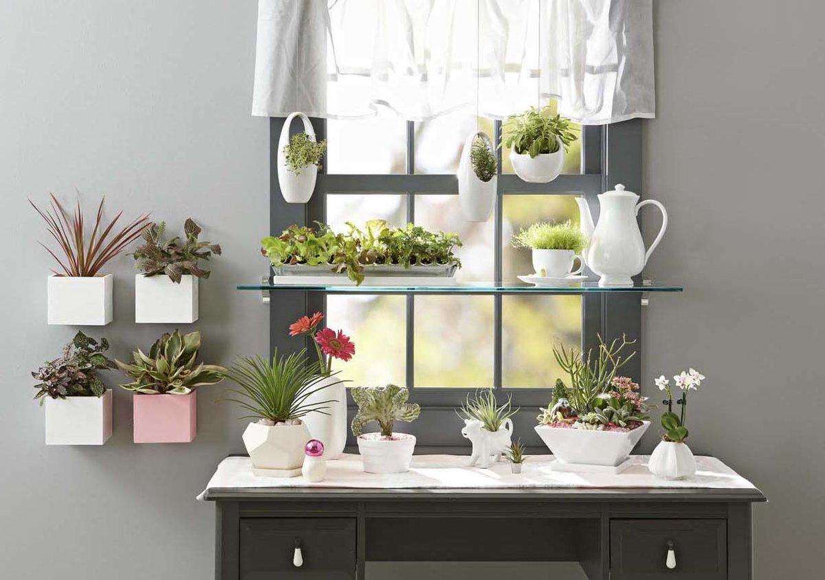 В каких комнатах нельзя размещать растения?