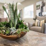 Как использовать кактусы и суккуленты в оформлении интерьера 2019?