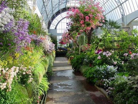 Какие растения первоначально выращивали в оранжереях?