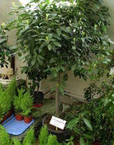 Какие растения можно выращивать на балконе зимой?