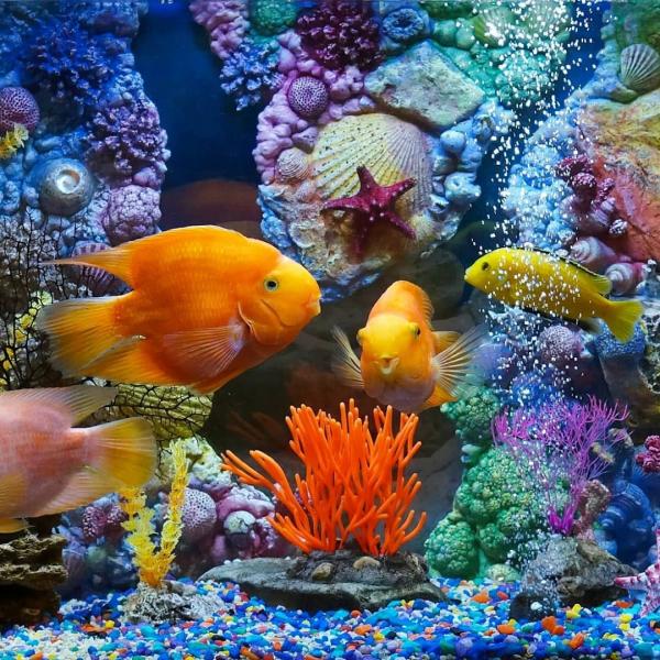 Интересные варианты, как украсить аквариум