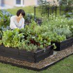 Дизайнерские грядки: как стильно украсить загородный участок?