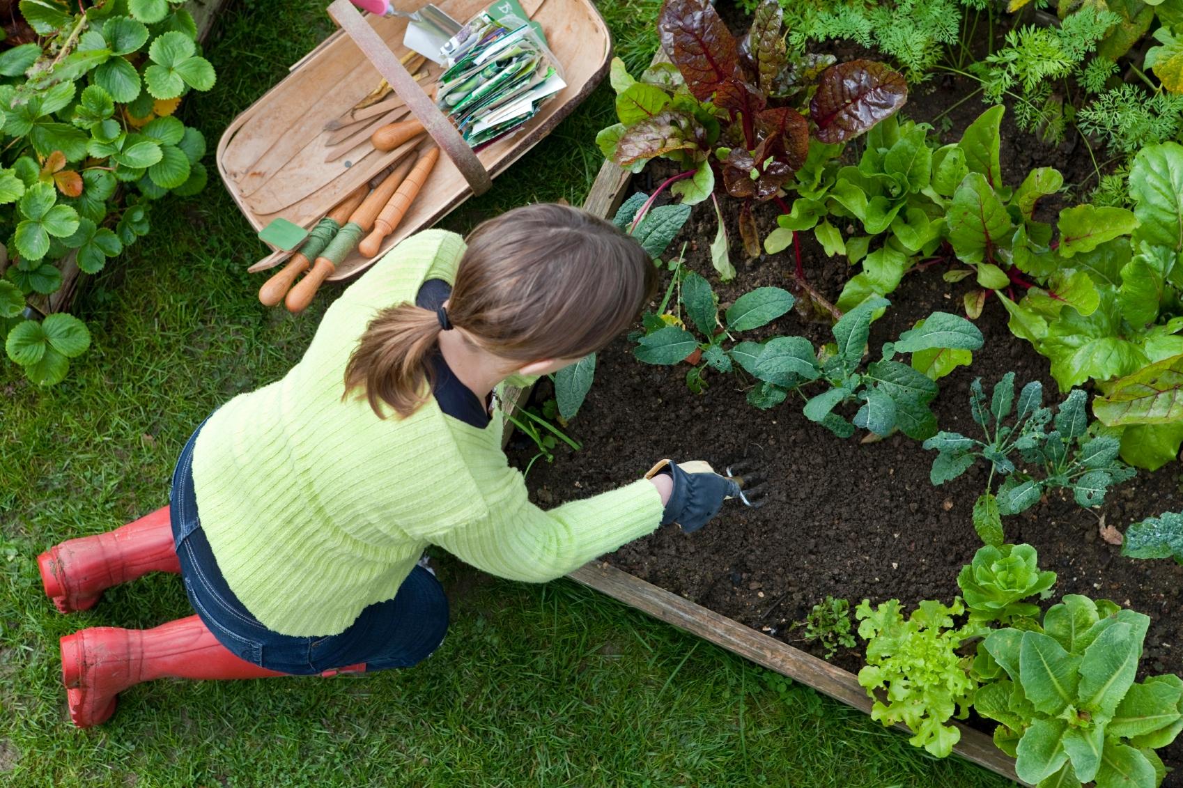 Что стоит посадить на даче в июле?