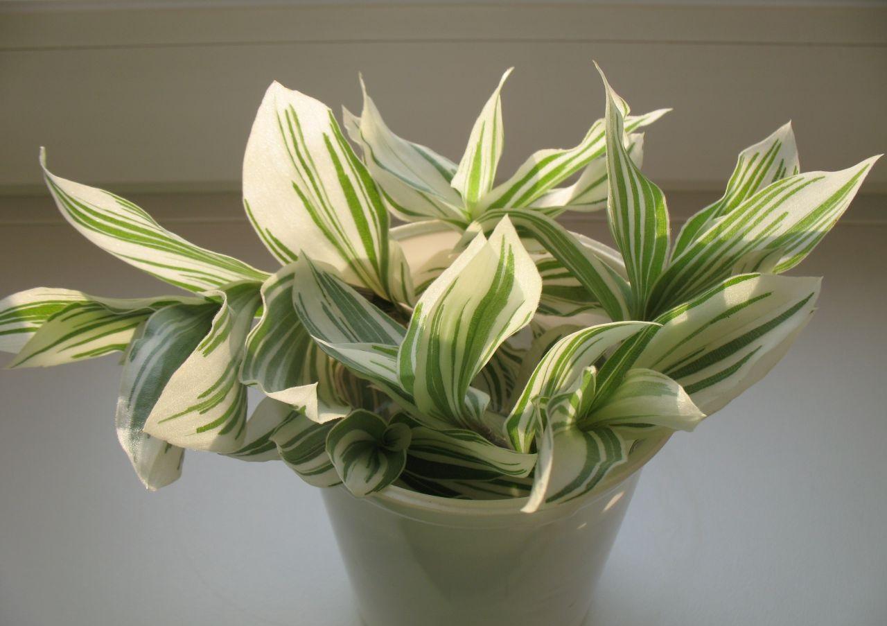 [Растения в доме] ТОП-5 лучших быстрорастущих комнатных растений