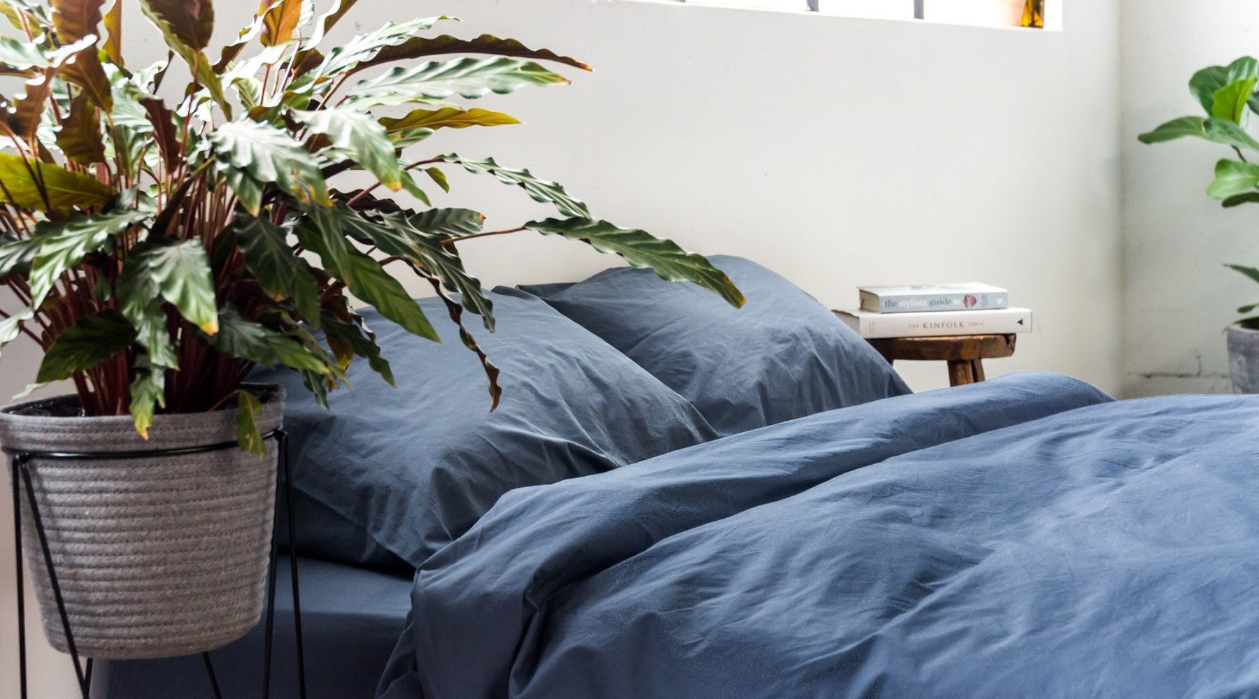 [Растения в доме] Какие цветы подходят для спальни?