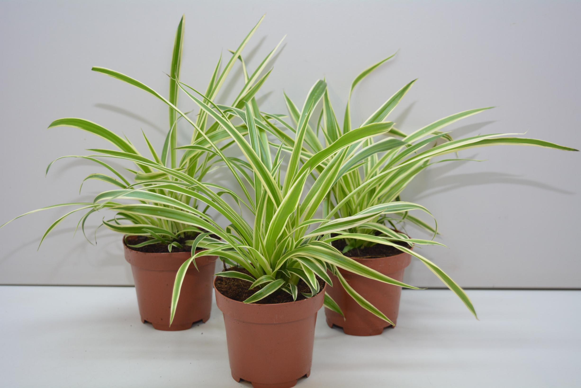 5 комнатных растений которые полезно иметь в доме
