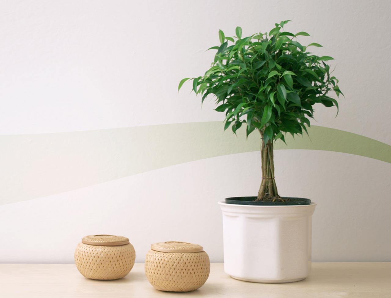 Озеленение для ленивых: самые неприхотливые комнатные растения