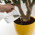[Растения в доме] 5 нестандартных удобрений для комнатных цветов