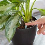 [Растения в доме] как ухаживать за новым цветком после покупки?