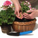[Растения в доме] 5 полезных советов по уходу за комнатными растениями