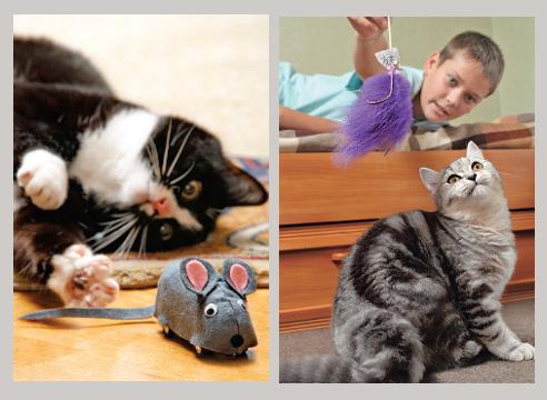 Игрушки для кошек своими руками из картона: как сделать с фото и видео