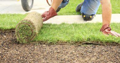 Рулонный газон на загородном участке: все «за» и «против»