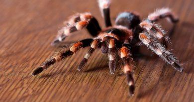 Тест №46 Хорошо ли Вы разбираетесь в опасных насекомых?