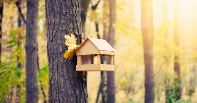 Кормушки для птиц в осеннем саду своими руками