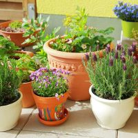 [Растения в доме] Какие растения стоит взять с дачи в квартиру на зиму?