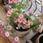 Выбор и установка балконных ящиков для цветов (+самодельные горшки)