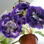 [Растения в доме] Глоксиния: как правильно ухаживать?