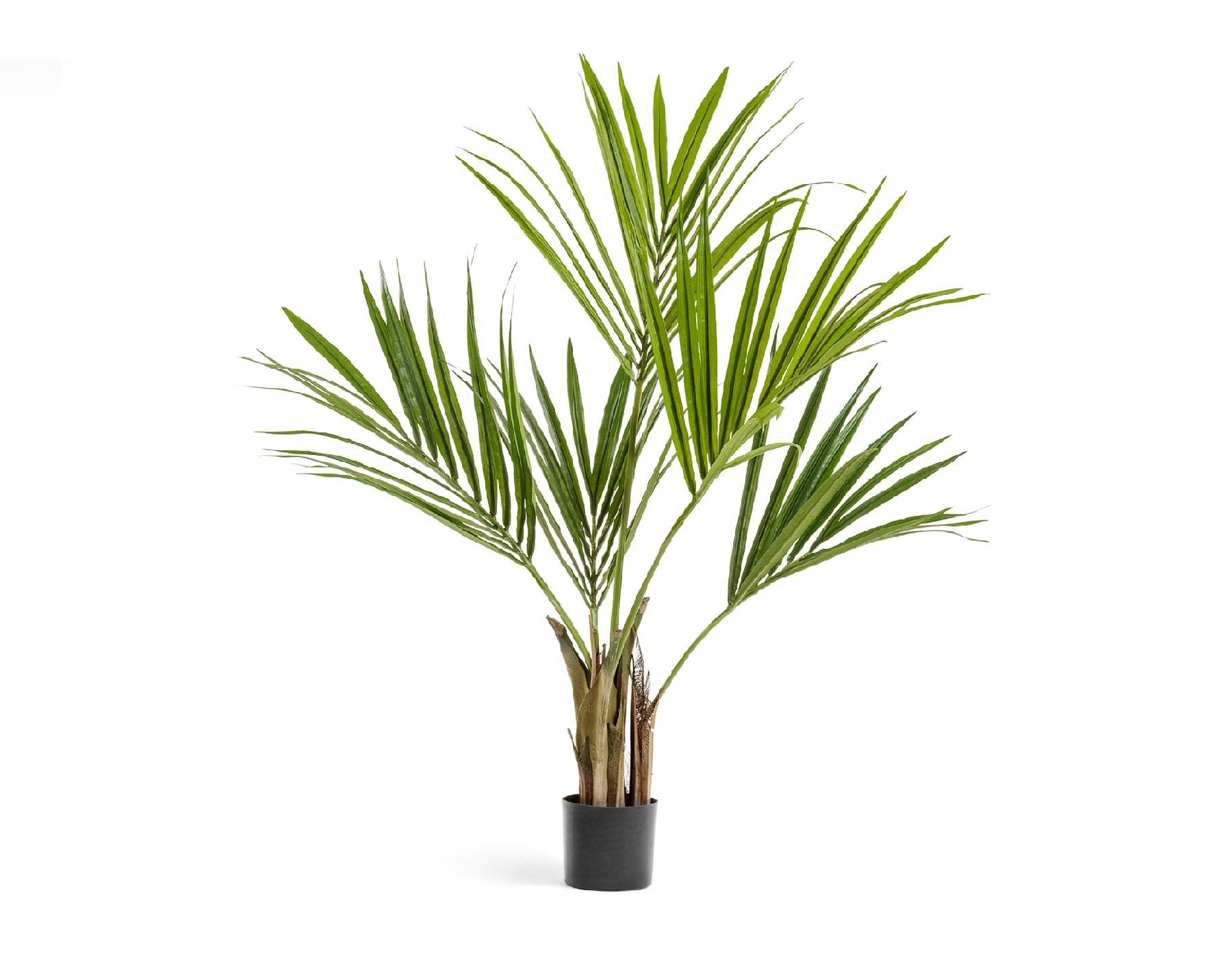 [Растения в доме] Ховея: как правильно ухаживать? - Интерьер