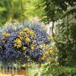 Как украсить балкон цветами своими руками (60 фото)